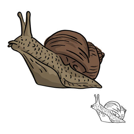 snail vector illustration sketch doodle hand drawn with black lines isolated on white background