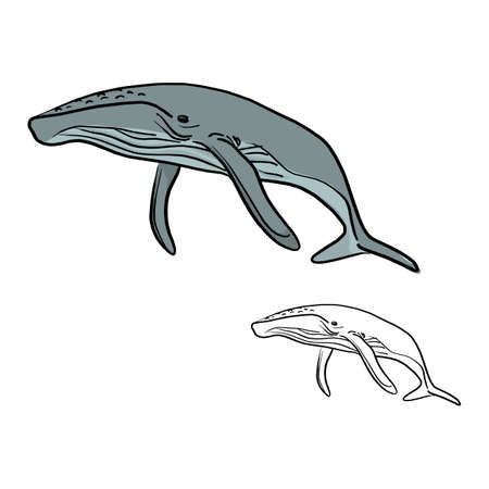 doodle whale vector illustration sketch doodle hand drawn with black lines isolated on white background Vettoriali