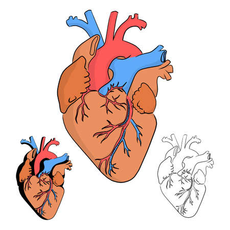 Anatomy of the human heart vector illustration sketch doodle hand drawn with black lines isolated on white background