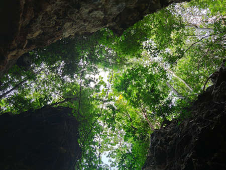 uprisen angle view of green leaves trees and cliff in the forest Foto de archivo