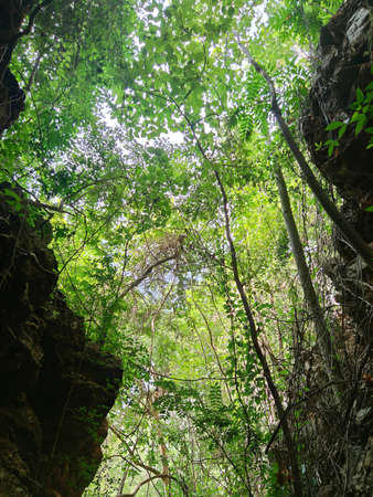 vertical photo of uprisen angle view of green leaves trees and cliff in the forest