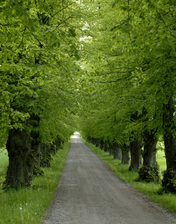 Avenue with trees   photo