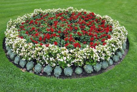 massif de fleurs: Parterre de fleurs
