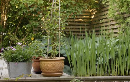 planters: Planters - backyard view Stock Photo