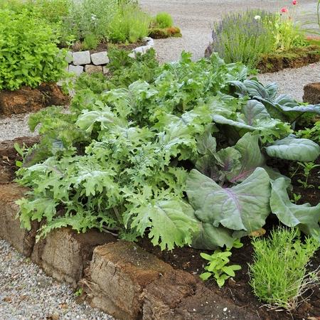 runner bean: Organic Gardening