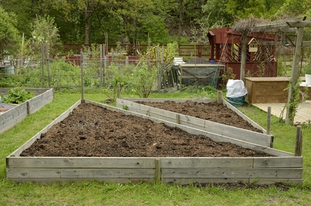 front  or back  yard: Organic Gardening on the Allotment
