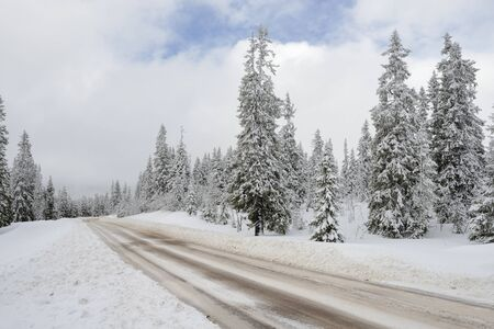 mt hood national forest: Road through a Winter Wonderland in Sweden