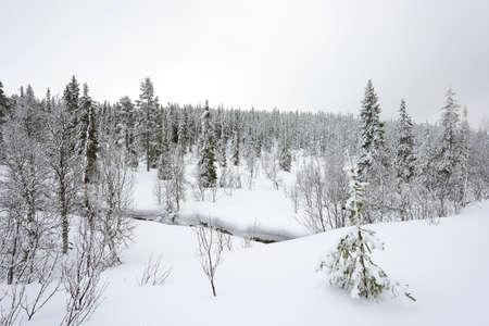 스웨덴 겨울 풍경에 눈으로 덮여 가문비 나무 숲