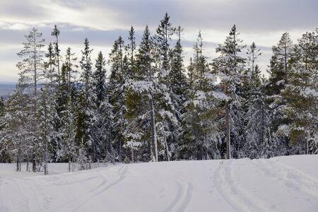 Traces in the snow, Idre in Sweden Standard-Bild