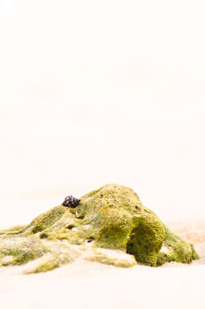 Mussel shell on a rock at a sand beach background Stock Photo