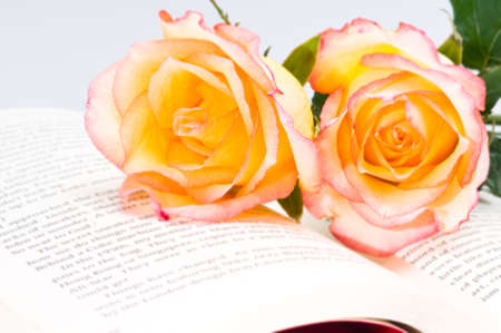 Beautiful red yellow rose over book with green leaves photo