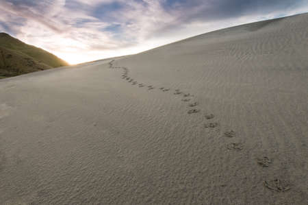Footprints in sand during sunrise photo