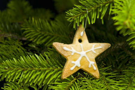 Star shape short bread cookie in  Christmas tree Stock Photo - 10056612