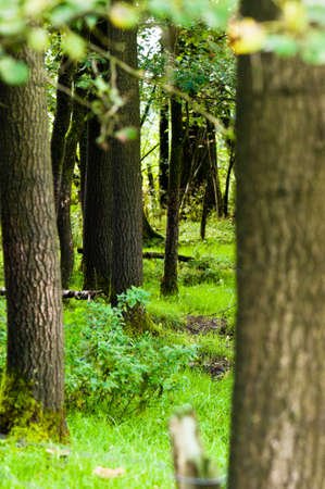moos: Trees of a forest during a daytime with beautiful green color Stock Photo