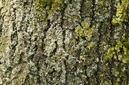 moos: Partial view of a tree trunk bark with moos Stock Photo