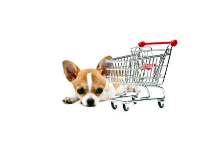 Pomeranian dog next to an empty shopping cart, over white photo