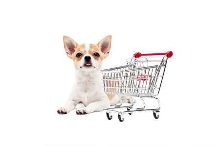 empty shopping cart: Pomeranian dog next to an empty shopping cart, over white