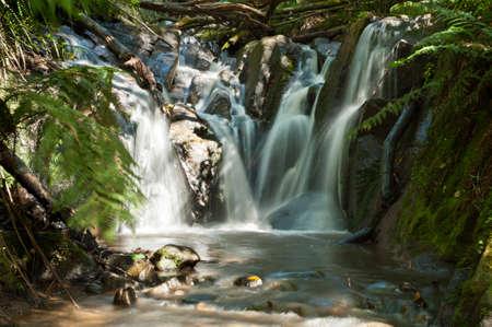 Dandenong Ranges, Olinda Falls, v blízkosti australském Melbourne za slunečného dne Reklamní fotografie