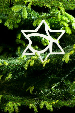 Star shape Christmas ornament in fresh green Christmas tree Stock Photo - 14122401