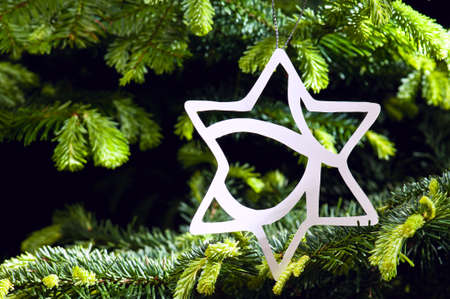 Star shape Christmas ornament in fresh green Christmas tree Stock Photo - 14122396