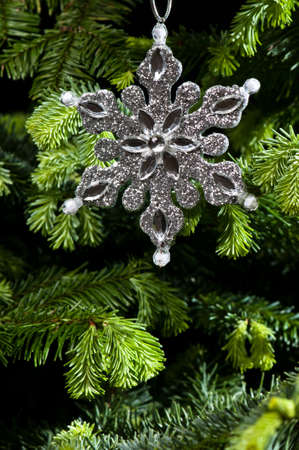 Star shape Christmas ornament, silver in color, in fresh green Christmas tree Stock Photo - 14122442