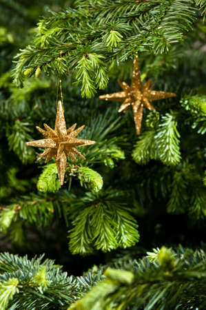Star shape Christmas ornament, gold in color, in fresh green Christmas tree photo