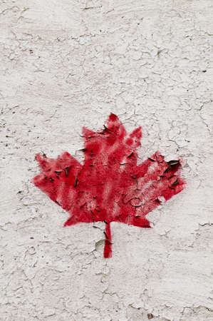 Single painted red maple leave on grunge surface nice in grey photo
