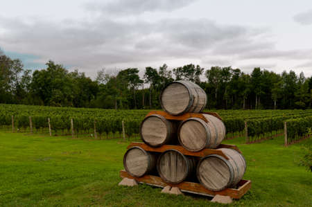 Six wooden barrels stacked up in front of a vinerya Stock Photo - 16596330