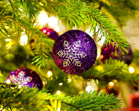 christmas tree purple: Bauble Ornament in a real Christmas tree in bright color