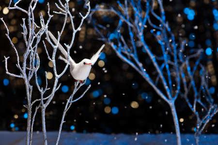 white bird: White bird in winter with snowfall Stock Photo