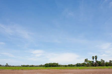 field rice and the blue sky in the thailand. Stock Photo - 7220700