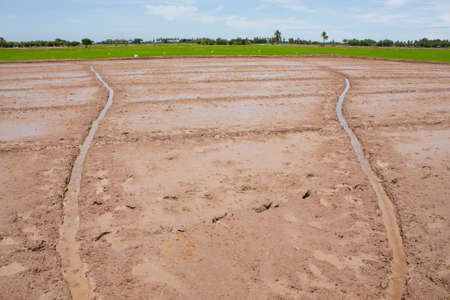 farmland field rice in thailand,water in the field rice Stock Photo - 7220902