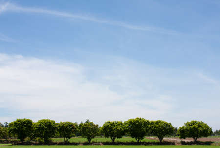 remar: l�nea de �rboles en el campo en el cielo azul.  Foto de archivo