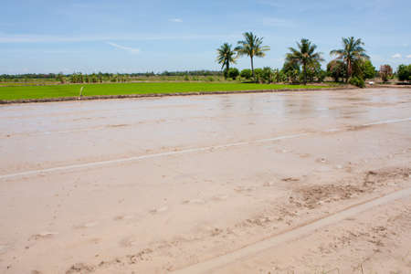before field rice,soil field rice and the green field rice. Stock Photo - 7220799