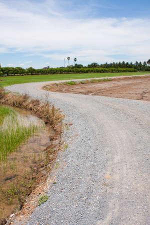 sidewalk curve in the field rice,sidewalk way for field rice Stock Photo - 7220922
