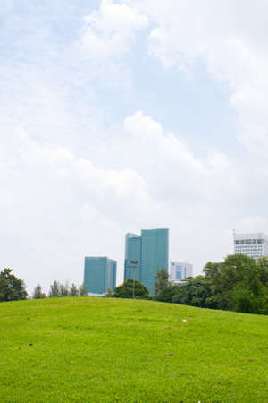 grass in park on the blue sky and building background. Stock Photo - 7693561