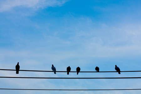 Birds on wires. Fresh is a dark sky background. photo