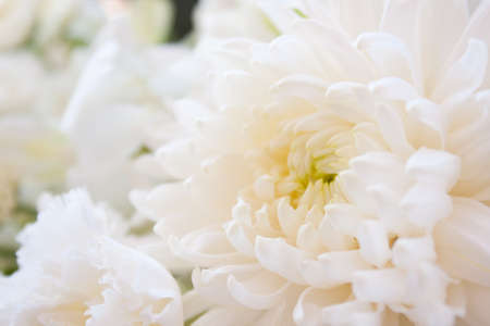 Among white pure white flowers fresh clean look and help stock among white pure white flowers fresh clean look and help stock photo mightylinksfo
