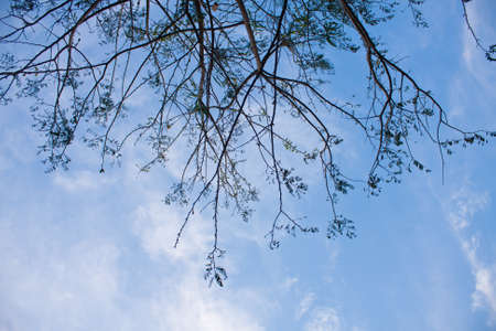 Branching twigs behind a dark sky bright