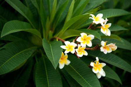White and yellow flowers taken in garden. Stock Photo - 10739153