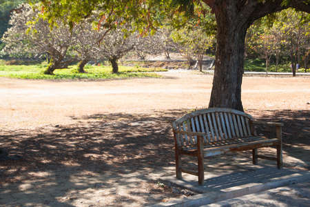 Bench under a tree. It's hot, I stay alone in a desolate photo