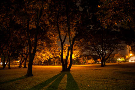 Trees and lawns. In the park during the night. photo