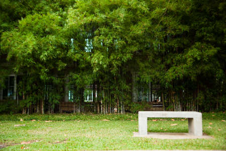 Bench seats and bamboo. Chair on the lawn green. Within the park. photo