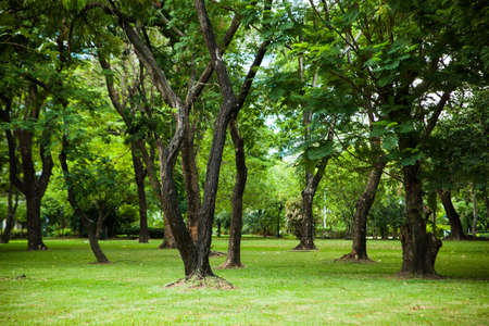 Trees in the park. Trees and lawns. Within the park. photo