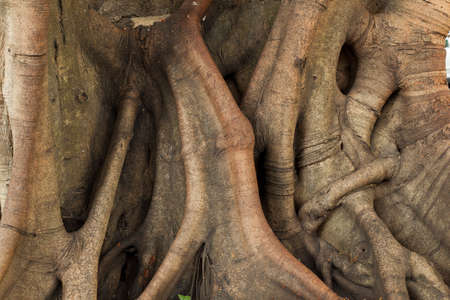 trunk of the tree. Tree age. Roots and large stems.
