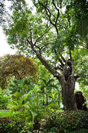 Big trees in the park. Trees of various sizes and types. Decorative plant in gardens. photo