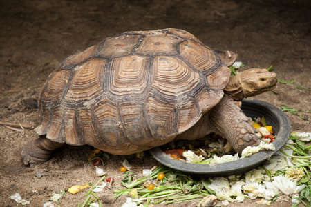 Large turtle breeding areas within the zoo. The style and color of the carapace is unusual. Stock Photo
