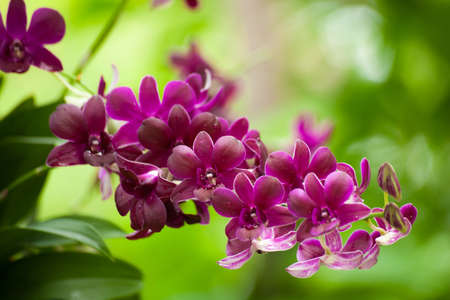Colorful orchids and ornamental plants in the garden. Refreshing to see the audience. Stock Photo