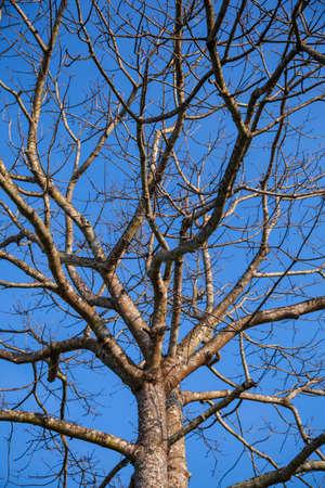 Dry tree to tree death dark sky bright. photo