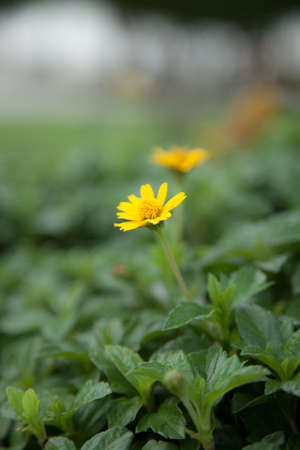 within: Small yellow flowers. Planted within the park. Flowers in full bloom.